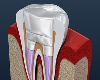 illustration of inside of tooth